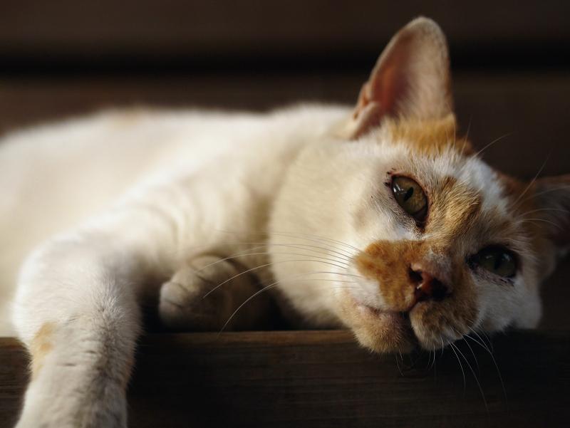 気怠そうに顔を上げる猫