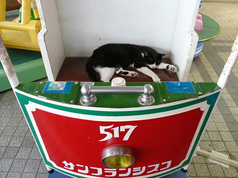 遊具場の猫2