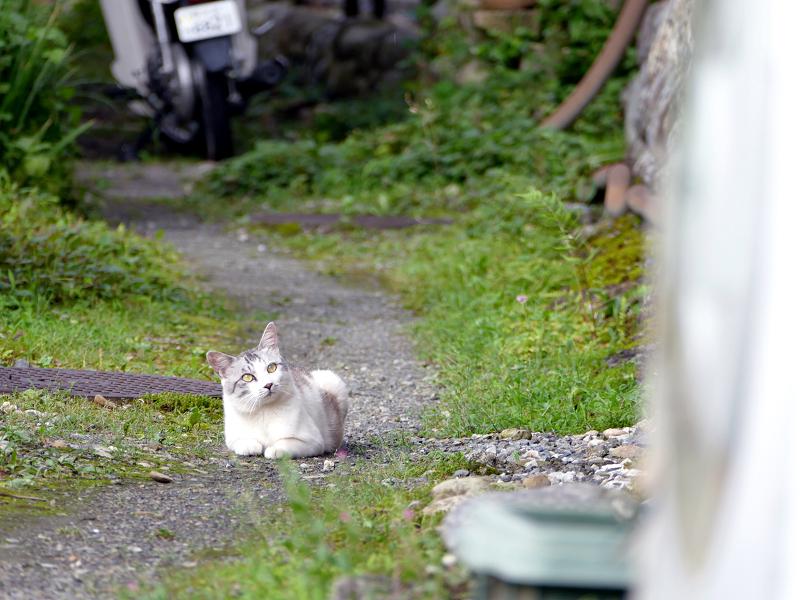 砂利路地の猫2