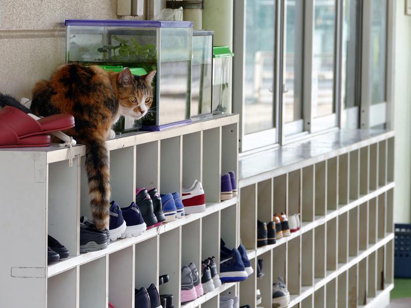 幼稚園靴箱の猫