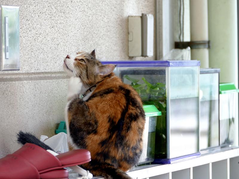 幼稚園下駄箱の猫