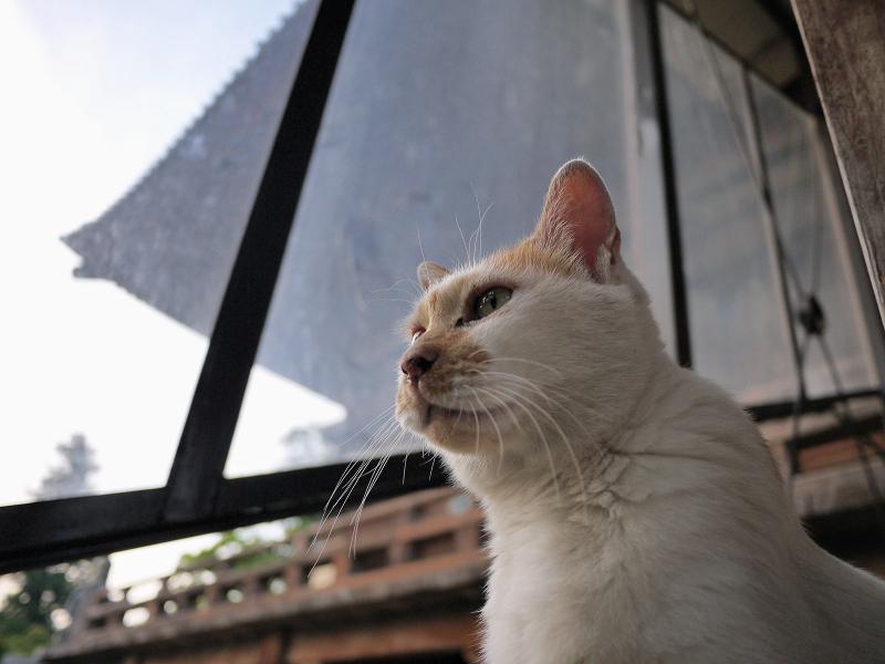 ローアングルで階段の猫を