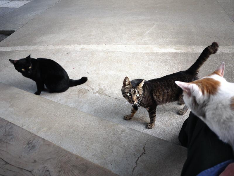 お寺の猫3匹1