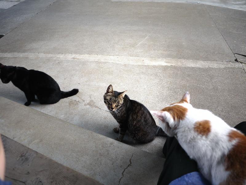 お寺の猫3匹2