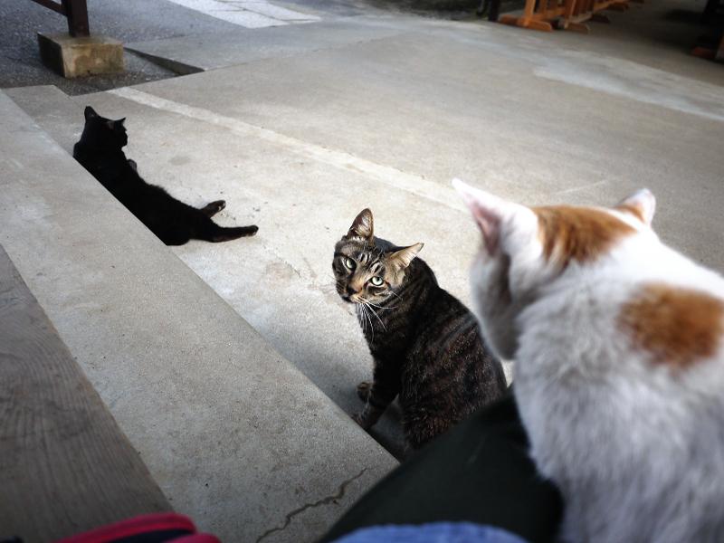 お寺の猫3匹3