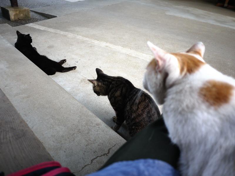 お寺の猫3匹4