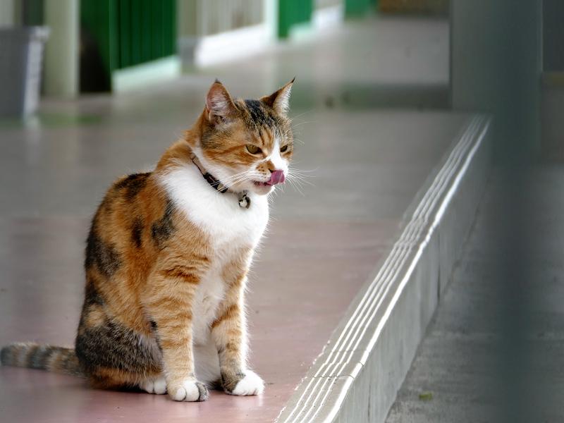 メダカの餌を食べた猫2