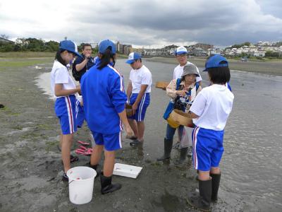 砂地生き物調査