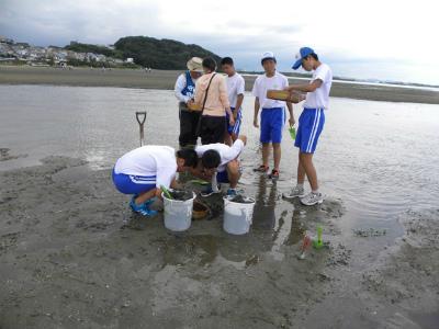 砂泥地生き物調査