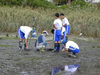 泥地生き物調査
