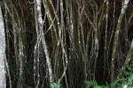 2.父島:樹-14D 1409q