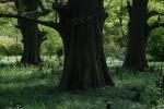 4.樹木:新宿御苑-31D 1504q