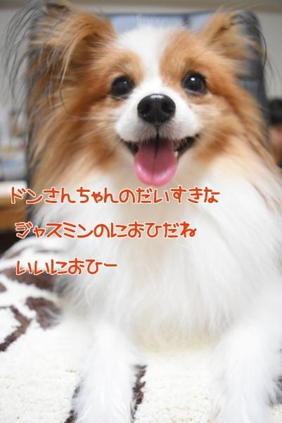 Z5KBoCbGj5_Xk6L1445076638_1445076691.jpg