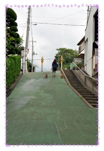 sakamichi2.jpg