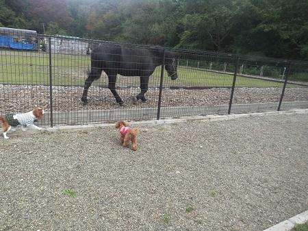 お馬さんとかけっこ1