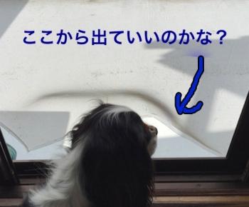 03IMG_6340.jpg