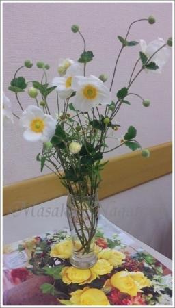 教室の秋花2