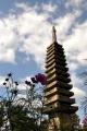 聳える仏塔とコスモス④