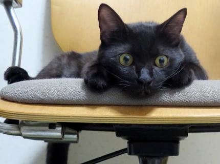 カワイイ黒猫画像
