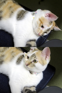 150902_cat03.jpg