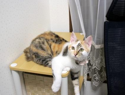150920_cat02.jpg