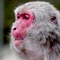 ワイドナショー画像 大分県の高崎山自然動物園お赤ちゃんザルにシャーロットと名付けたことに「英王室に失礼」と抗議殺到 2015年5月10日