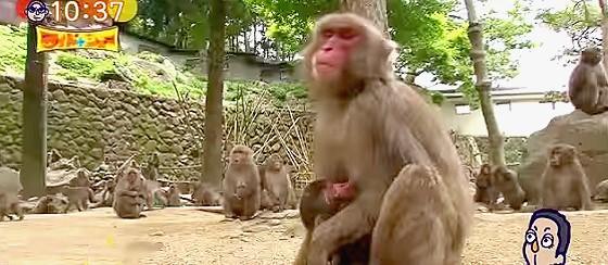 ワイドナショー画像 大分の動物園で赤ちゃんザルに公募でシャーロットと名付け抗議殺到 2015年5月10日