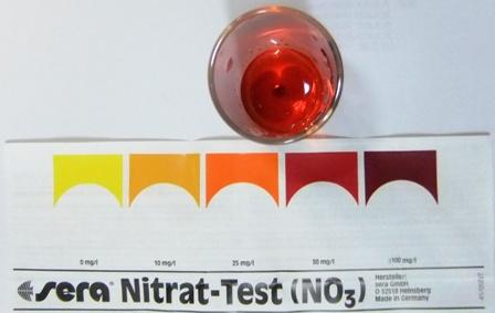 硝酸塩濃度メダカ20151004