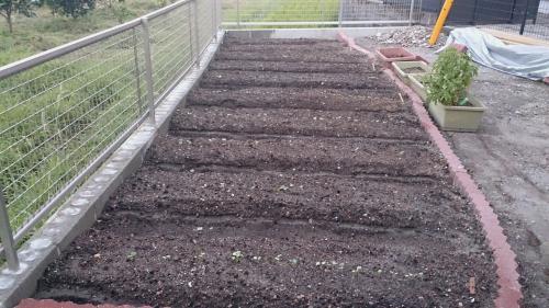 やっとできた小菜園