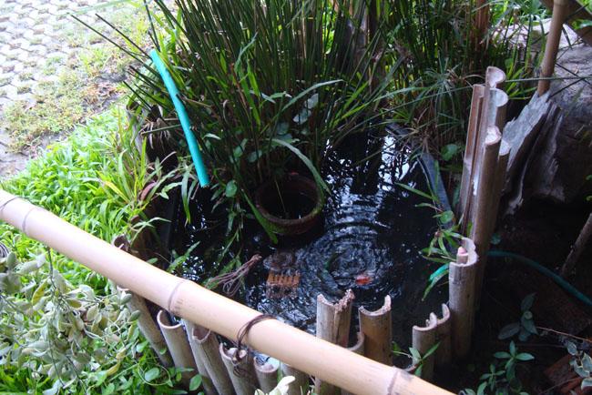 トノサマガエルがいる池?
