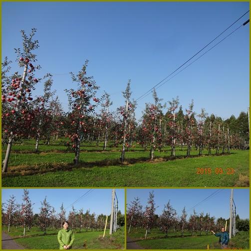 003 リンゴ