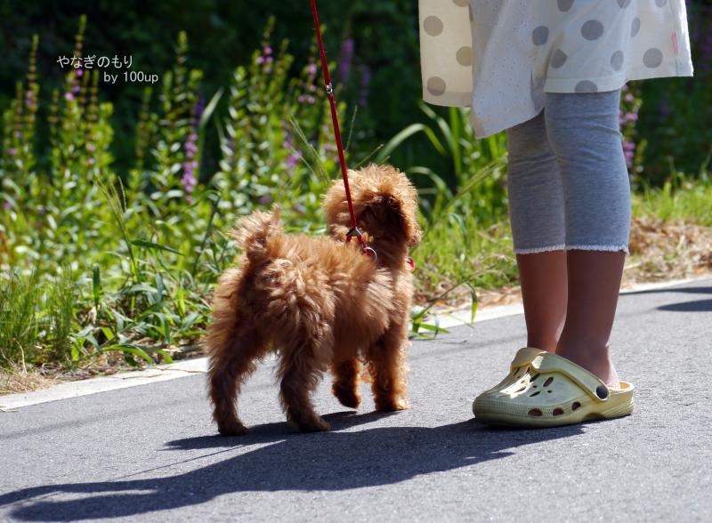 2015.8.8 新潟県朝の散歩2
