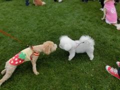 動物愛護フェス
