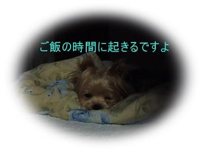 P1140080_201509130930181a2.jpg