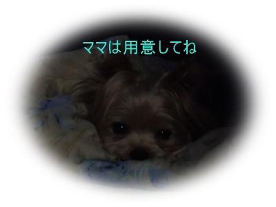 P1140081_20150913093019228.jpg