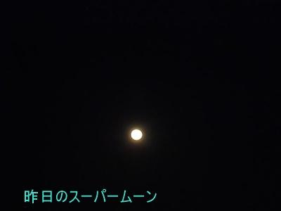 P1140535.jpg
