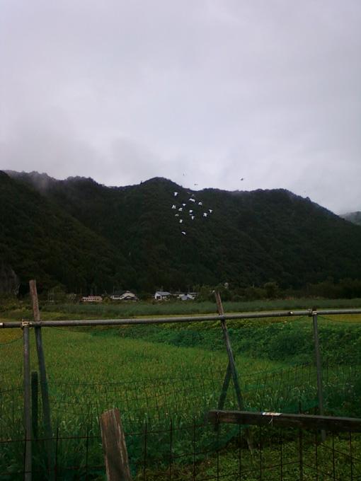 若鳩2015090201