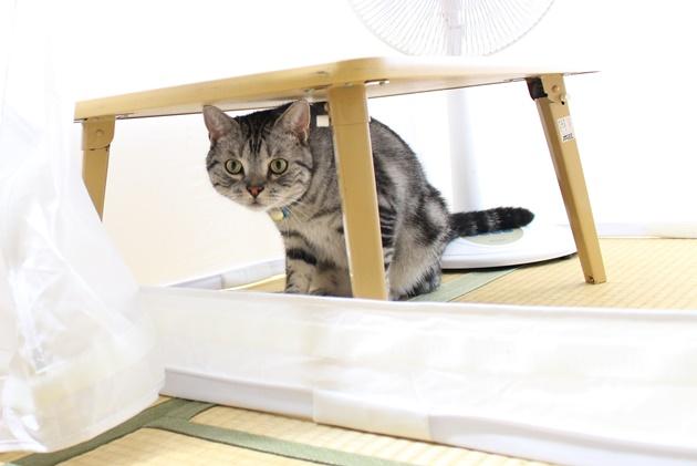 珍しい物に惹かれる猫