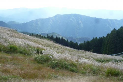 生石山 ススキ