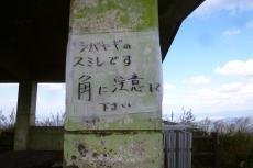 生石山 ヤギ