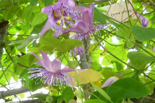 県 緑花センター (温室)