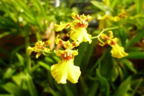 県 緑花センター(温室)