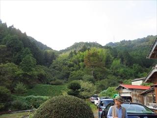 栗拾い山②