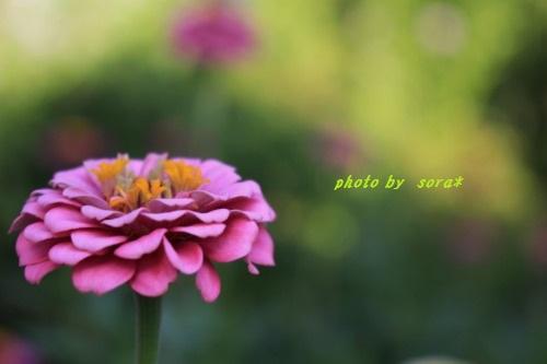 ブログNo.355(気持ちが良くてもカメラ目線)13