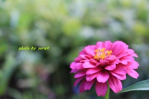 ブログNo.363(獲物ごっこ)11