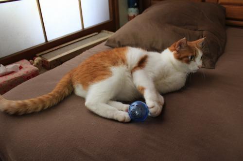 ブログNo.351(おもちゃと猫)1
