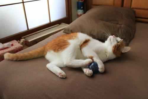 ブログNo.351(おもちゃと猫)3