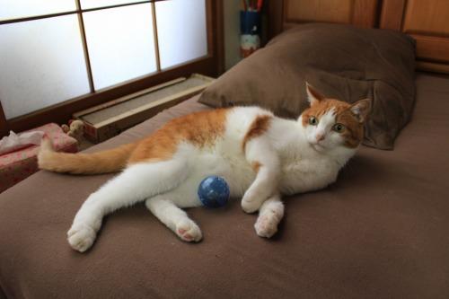 ブログNo.351(おもちゃと猫)5