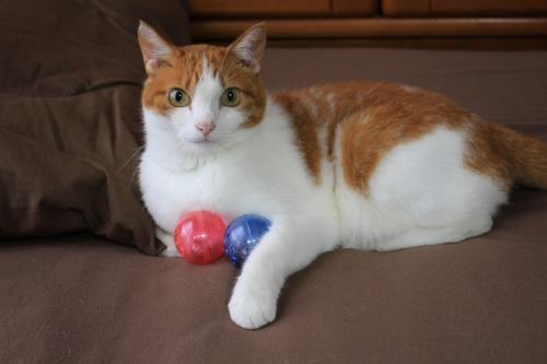 ブログNo.351(おもちゃと猫)7