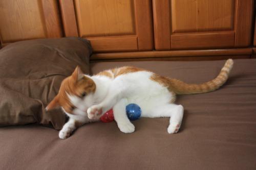ブログNo.351(おもちゃと猫)10